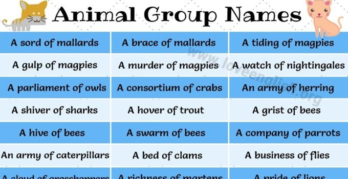 Groups of Animals