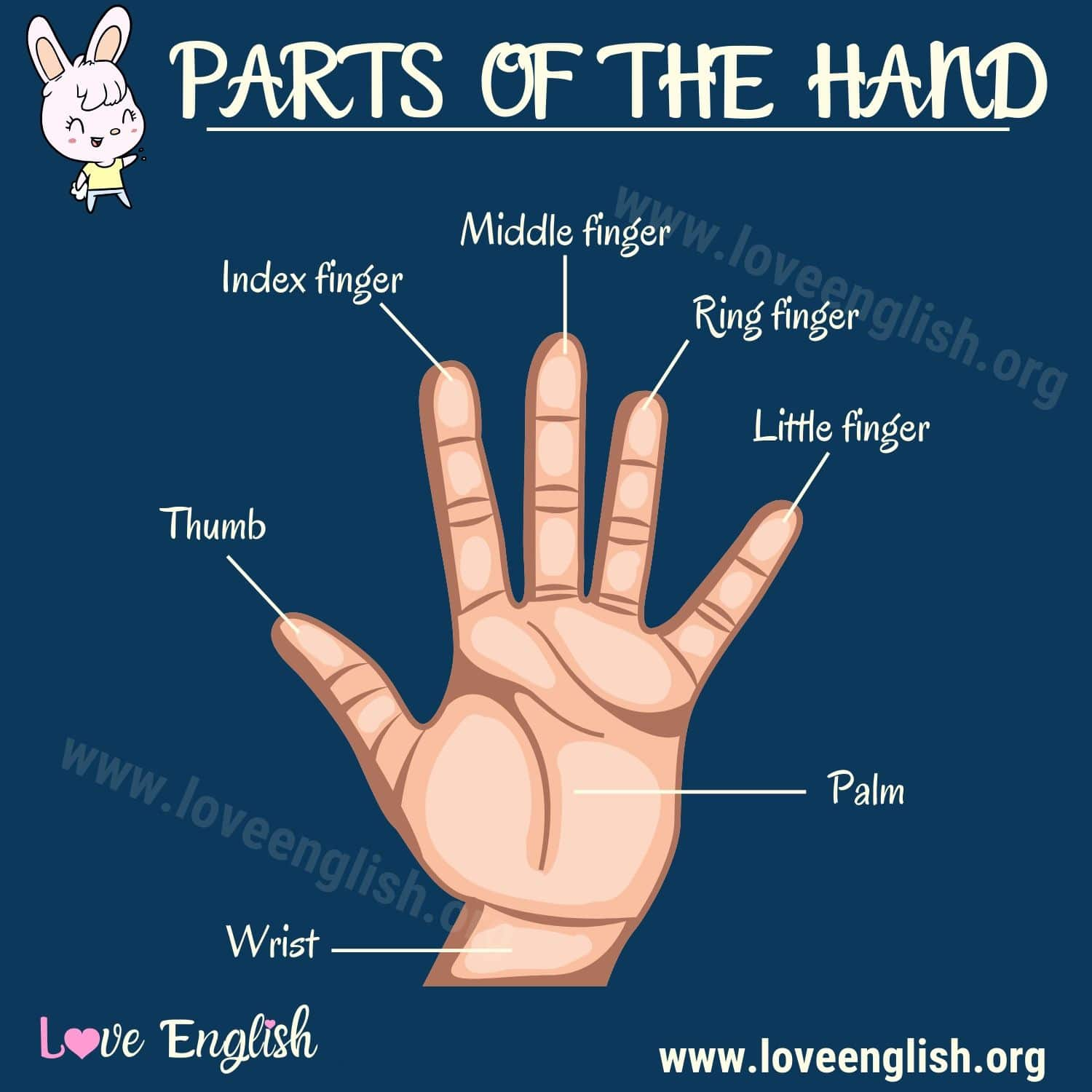 Parts of the Hand