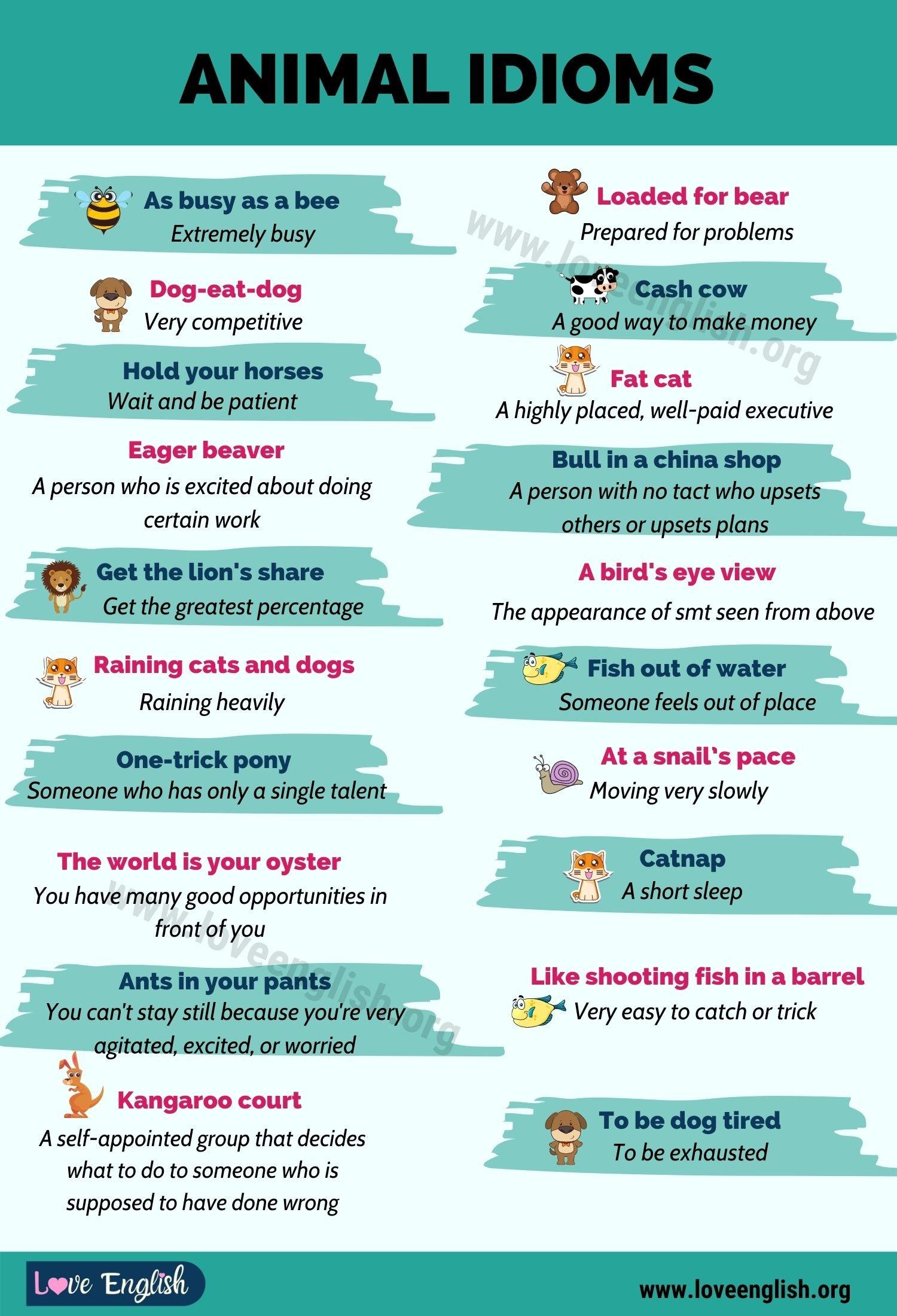 Animal Idioms