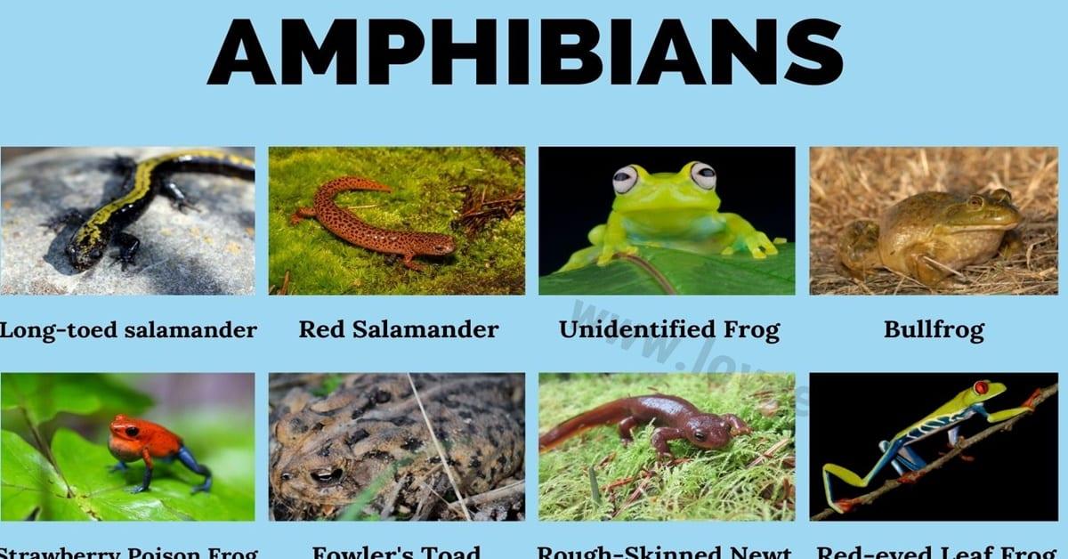 Amphibians: Amazing List of 30+ Amphibians Around the World 1